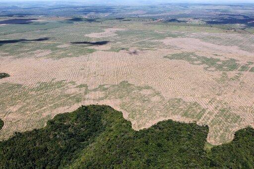 Niszczenie siedlisk jako przyczyna spadku bioróżnorodności