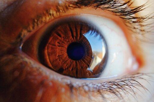 Budowa narządu wzroku człowieka
