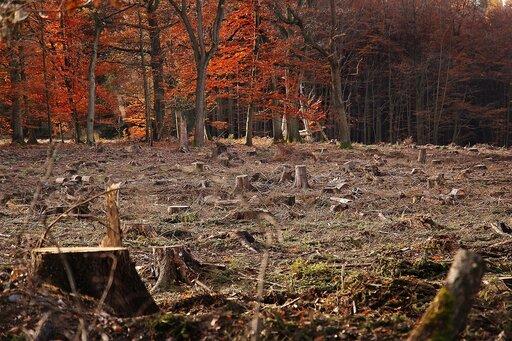 Formy ochrony przyrody