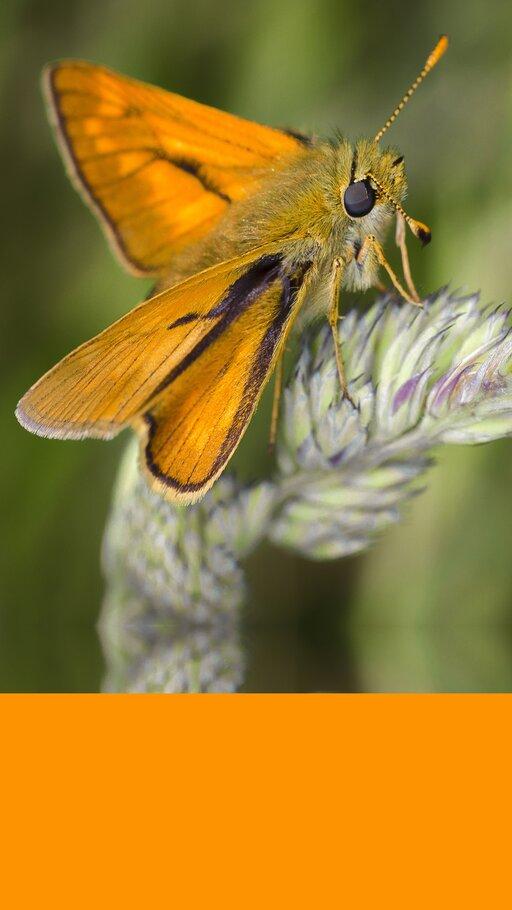 Bioróżnorodność ijej znaczenie