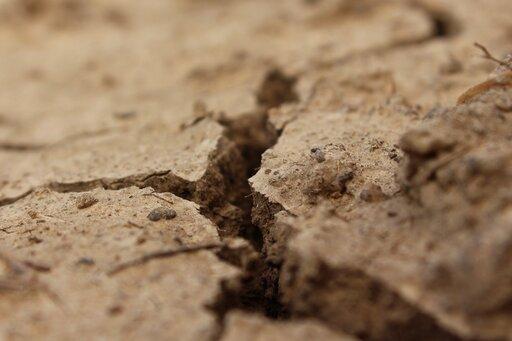 Geneza wybranych typów gleb strefowych