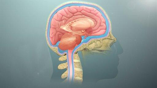Nerwy czaszkowe – przebieg iobszary unerwiane