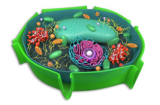 Różnorodność budowy komórek eukariotycznych