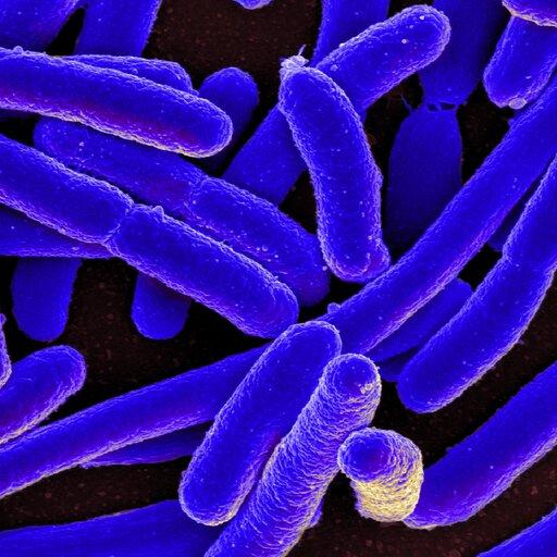 Lekooporność bakterii ijej przyczyny