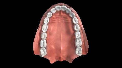 Uzębienie człowieka, budowa irodzaje zębów