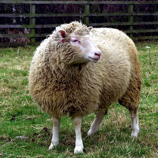 Tworzenie genetycznych kopii, czyli prawie wszystko na temat klonowania zwierząt