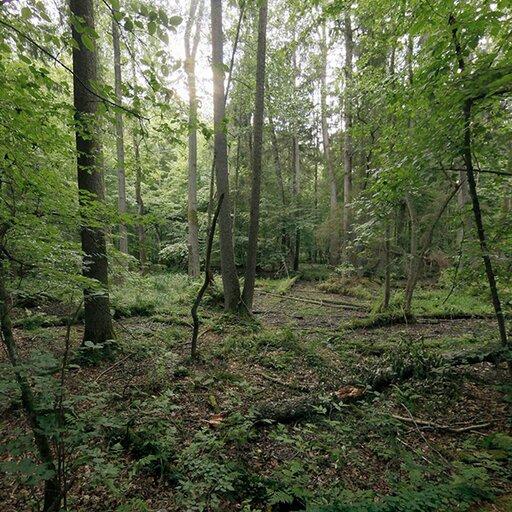 """Wycieczka wirtualna """"Białowieski Park Narodowy"""""""