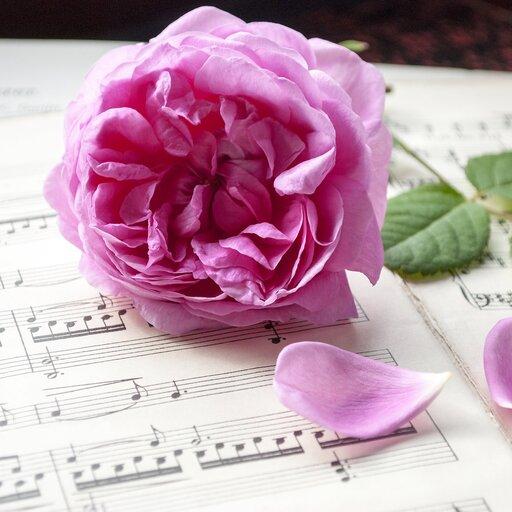 Sprawdzian wiedzy zzakresu muzyki Romantyzmu