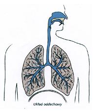 Układy rozprowadzające tlen worganizmie