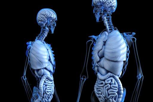 Receptory narządów wewnętrznych, stawów imięśni człowieka