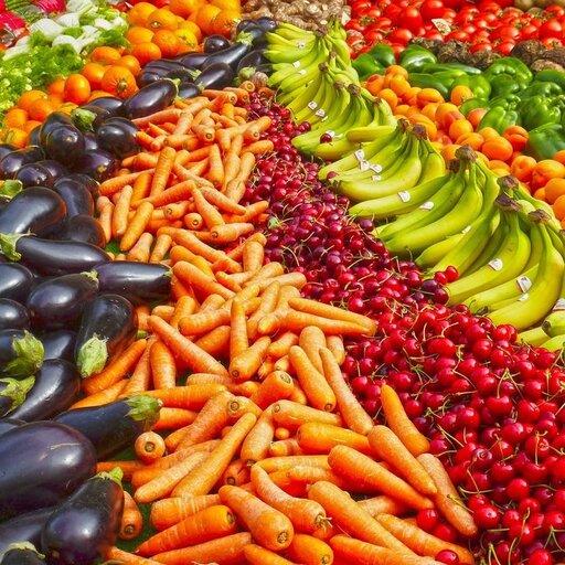 Transport produktów fotosyntezy wroślinie