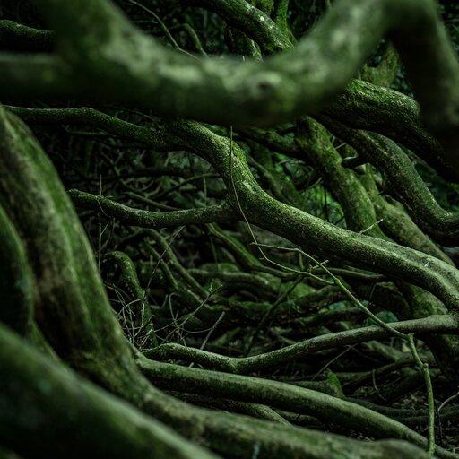 Morfologia korzenia
