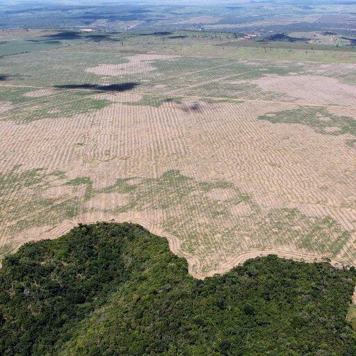 Problem wylesiania ipustynnienia we współczesnym świecie
