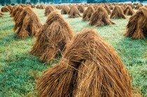 Agrobiznes źródłem zagrożeń środowiska naturalnego
