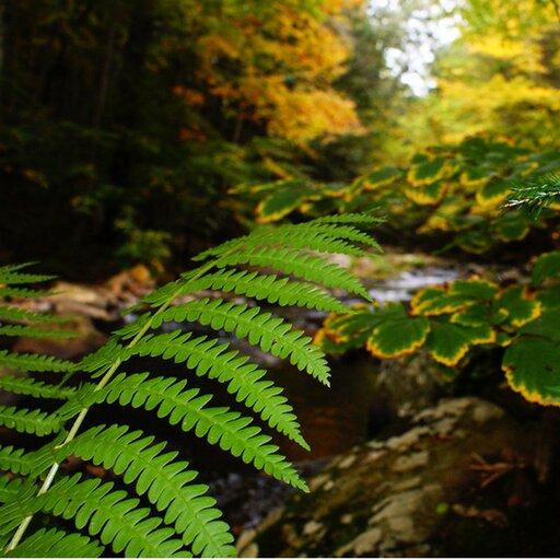 Formy ekologiczne roślin wzależności od warunków środowiskowych