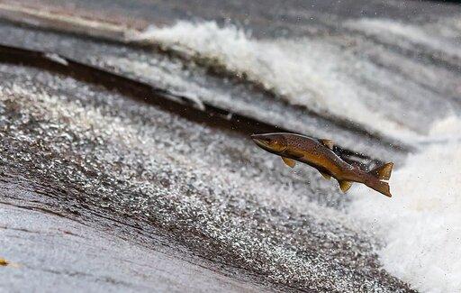 Wędrówki ryb