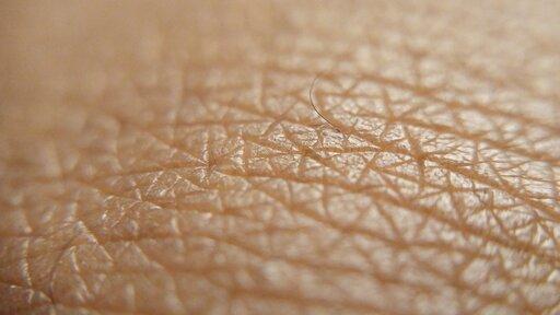 Rodzaje ifunkcje gruczołów skórnych kręgowców