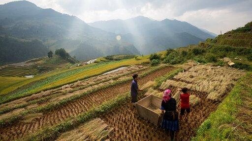 Podział rolnictwa ze względu na nakłady pracy