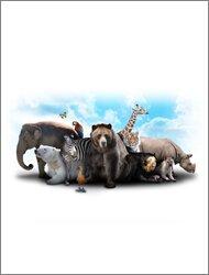 Klasyfikacja królestwa zwierząt